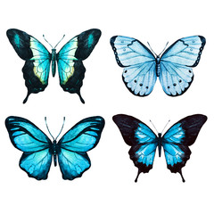 Watercolor butterflies raster