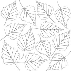 Wall Mural - contoured birch leaves