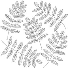 Wall Mural - contoured rowan leaves