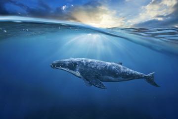 whale in half air