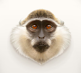 Monkey head, realistic vector illustration