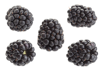 Blackberry fruit collection