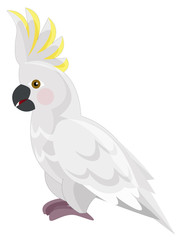 Cartoon parrot - cockatoo - isolated - illustration for the children
