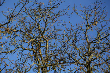 Branches of naked trees