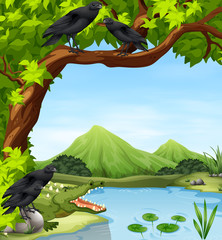 Crows and crocodile by the river