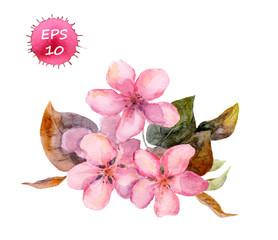 Pink fruit tree flower: apple, cherry, plum, sakura. Watercolor