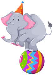 Happy elephant balancing on ball