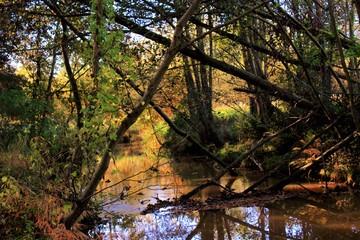Photo sur Plexiglas Nature natuur herfst