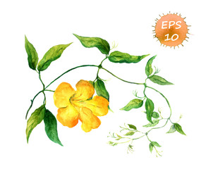 Branch of yellow bindweed