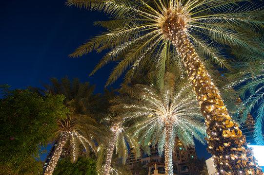 christmas decoration background palm tree