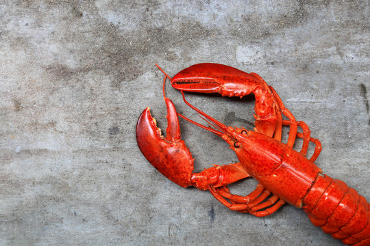 Red lobster, the best of lobster in the world