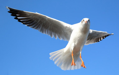 Seagull flying in beautiful sky and bright sun