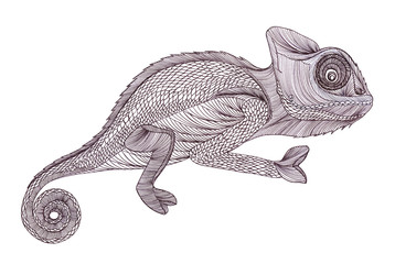 Profile Lizard.Chameleon. Hand drawn.Graphic style