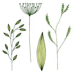 Vector grass set. Illustration with herbs, botanical art