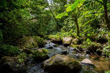 ein kleiner Fluss im grünen dichten Dschungel in Costa Rica