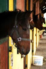 Fototapete - Horses