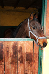 Fototapete - Horse
