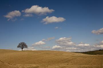 Albero solitario sotto le nuvole.