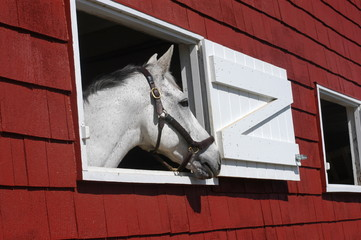 horse looks out window in red barn