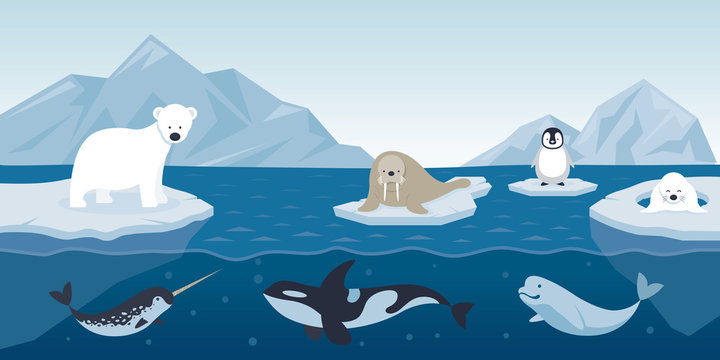 Arctic Animals Character and Background, Winter, Nature Travel and Wildlife