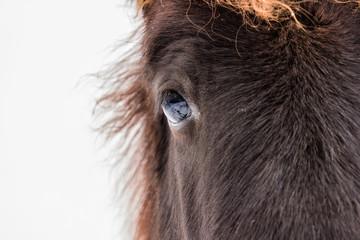 Pony Augen Portrait