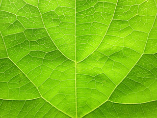 closeup pattern of green leaves