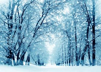 Winter scenery, frosty trees in park