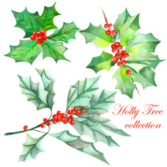Collection (set) with isolated Christmas branches of holly tree (the branches with the red berries and green leaves) painted in watercolor on a white background