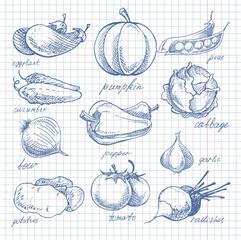 Vegetables doodle ink on notebook sheet in cell