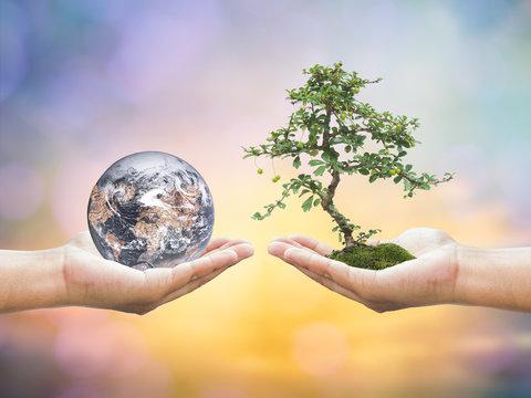 First, human hands holding medium tree. Second, human hands hold