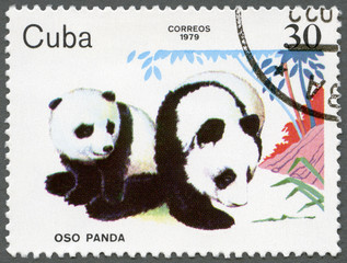 CUBA - 1979: shows Pandas, series Zoo Animals
