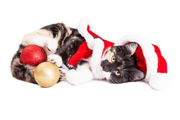 Adorable Christmas Calico Santa Kitty