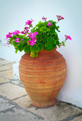Typical Greek vase with pink geraniums flowers