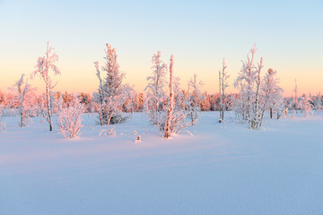 Siberian taiga in the winter. The Yamal Peninsula