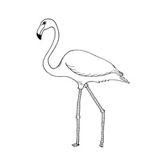 hand draw flamingo style sketch