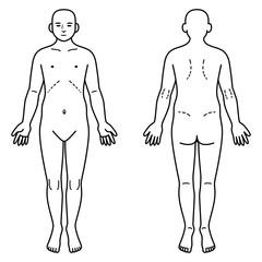 人体 正面と背面
