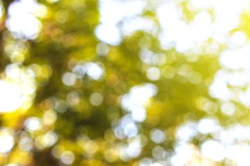 Natural Bokeh,blurred bokeh