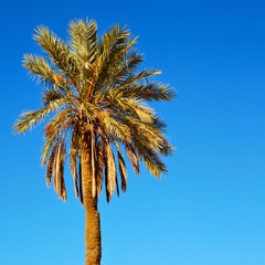 tropical palm in morocco africa alone   and the sky