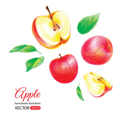 Organic food illustration. Red apple