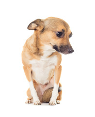 funny doggy on a white background