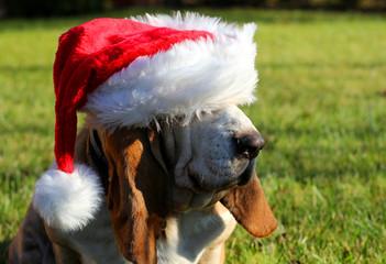 Dog Christmas hat
