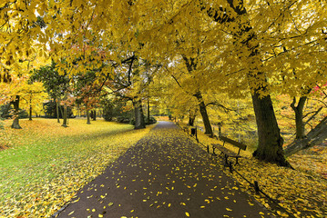Collection of Beautiful Colorful Autumn Leaves / green, yellow, orange