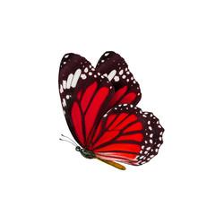 common tiger butterfly , Danaus Genutia , monarch butterfly isol