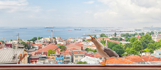 Seagull sit on balcony with Istanbull view