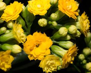 beautiful background of yellow flower