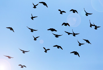 silhouette of a flock of pigeons on blue sky