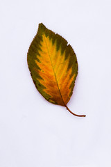 Fall Leaf with Flame Pattern