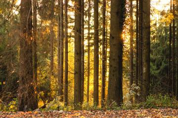 Goldener Oktober im Schwarzwald