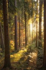 märchenhafte Herbstlandschaft im Schwarzwald