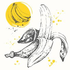 Hand drawn banana. Black and white sketch of food.